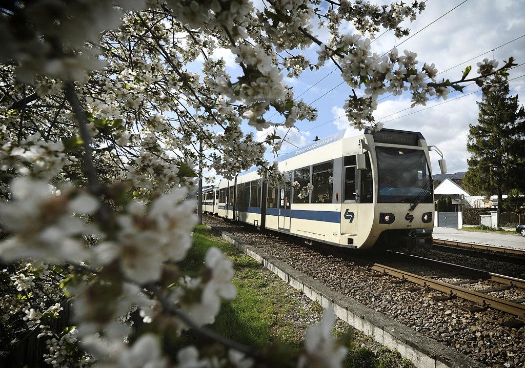 Badner Bahn im Frühling